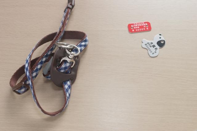 犬の鑑札と狂犬病予防注射済票と胴輪