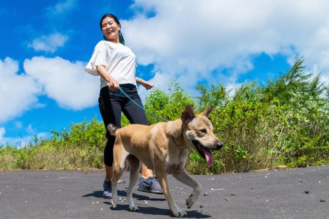 楽しそうに散歩する人と犬