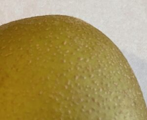 キウイの皮の表面
