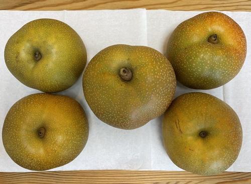 5個の梨(幸水)