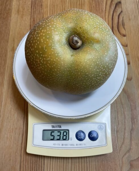 1個538gの梨