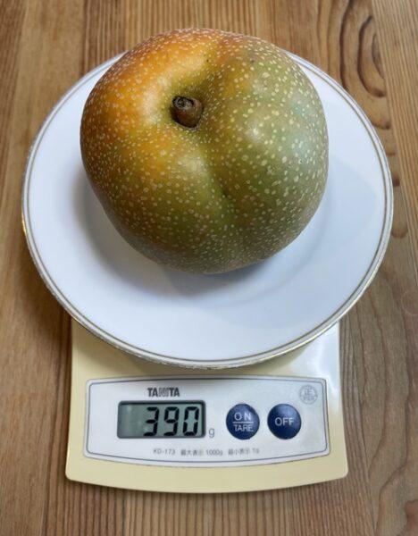 1個390gの梨