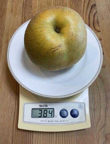 1個384gの梨