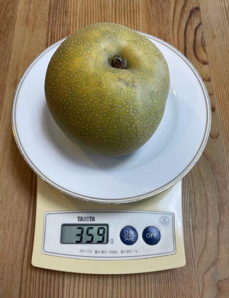 1個359gの梨