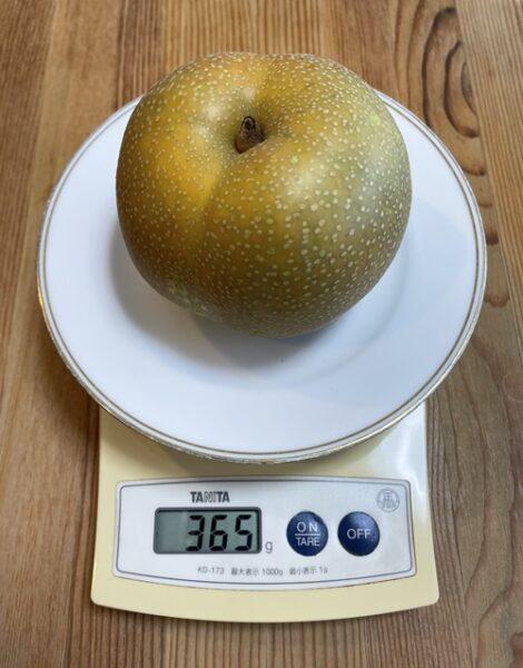 1個365gの梨