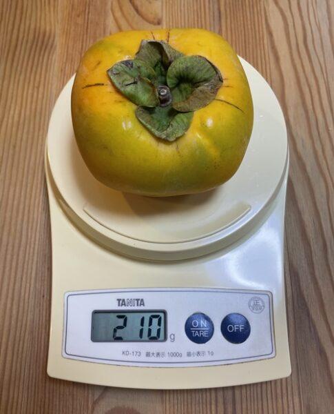 1個210gの柿