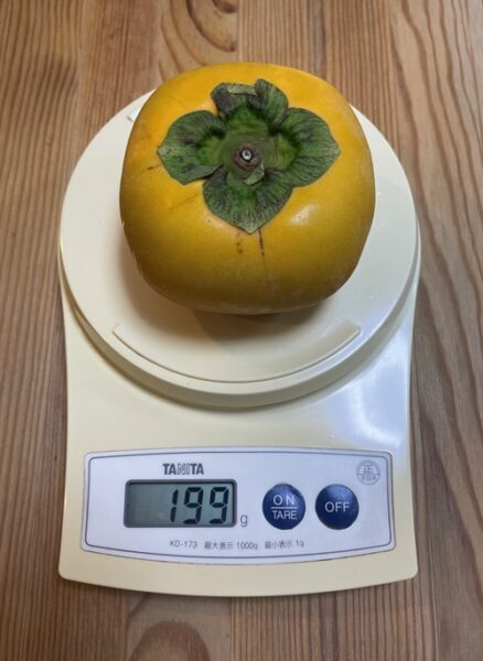 1個199gの柿