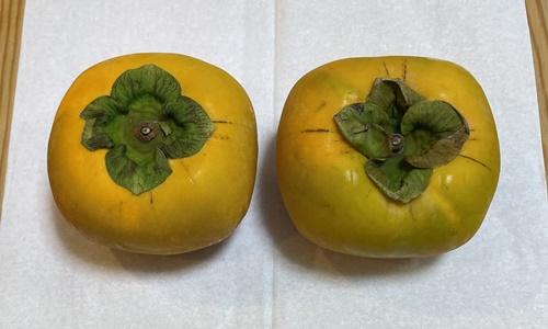 重さを量った2個の柿